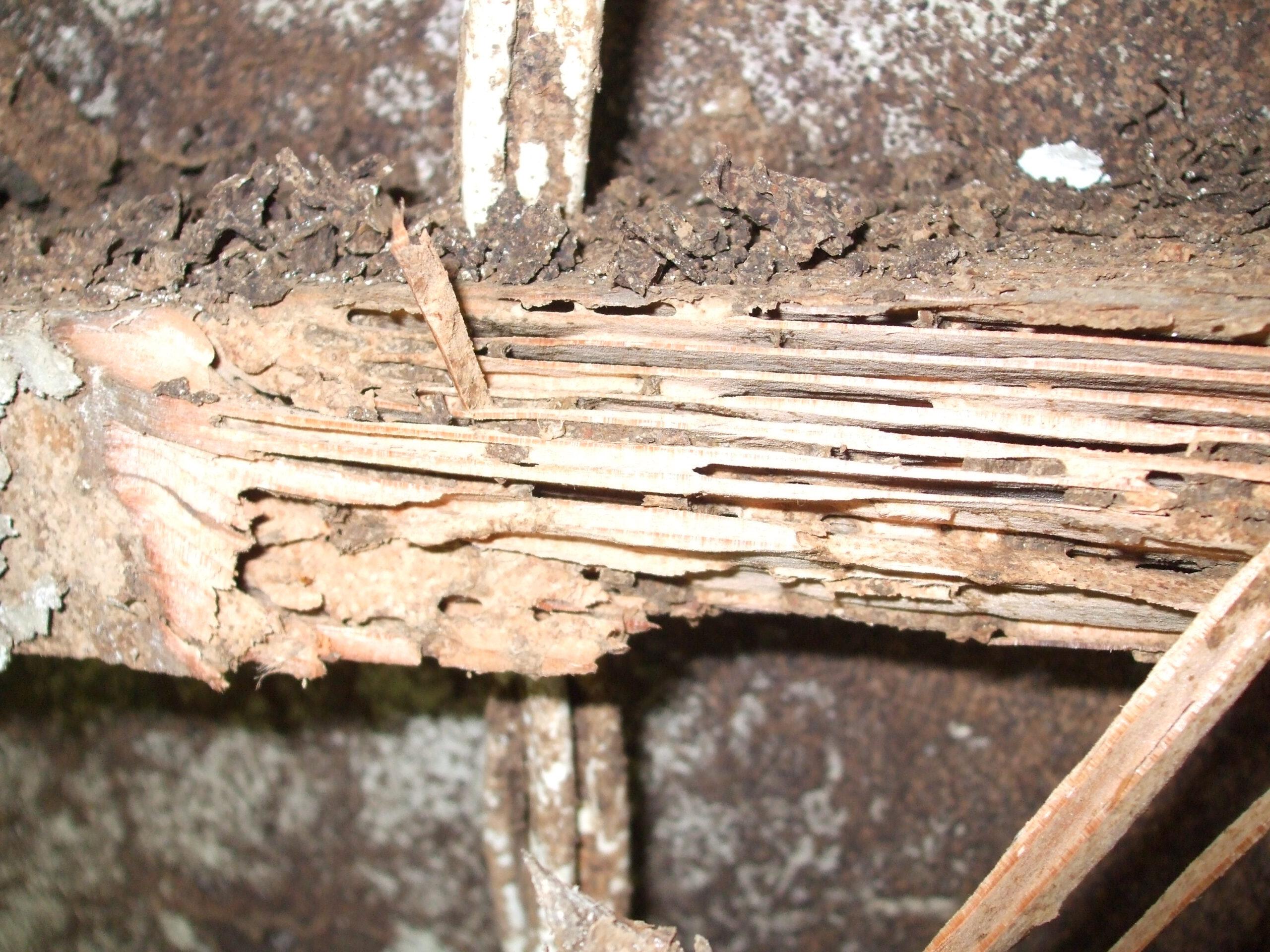 Termite Pest Control,Termite Control Sydney,Termite Inspections,Termite Baiting,Termite Treatments